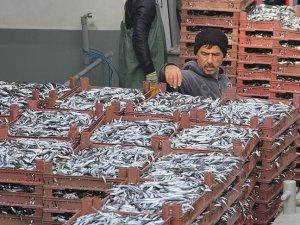 Doğu Karadenizli balıkçılar hamsiden umutlu