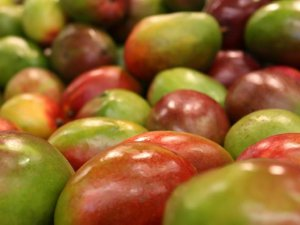 Tropik meyvelere tescil geliyor