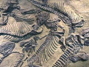 130 milyon yıllık dinozor fosili kalıntıları bulundu