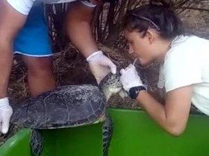 Deniz kaplumbağasını hayata döndürdüler