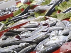 Balıkçıların yeni gözdesi Çinekop