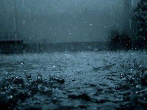 Yağışlar Çiftçilerin yüzünü güldürdü