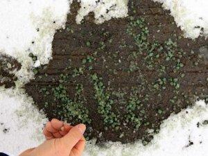 Karla mücadelede çığır açacak formül!