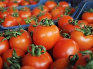449 milyon Dolarlık yaş sebze ve meyve ihracatı!
