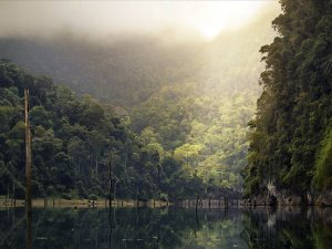 Amazon'daki orman kaybı yüzde 20 arttı