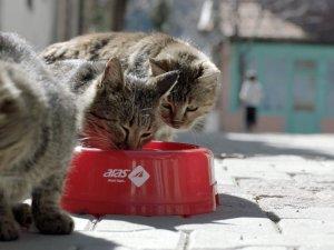 Aras Kargo'dan sokak hayvanları için su kabı