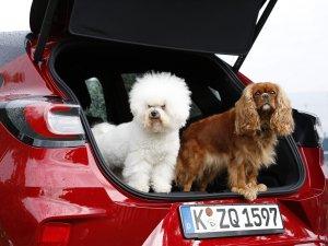 Ford, Dünya Köpek Günü'nü kutluyor
