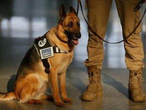 'Lucy' Adnan Menderes Havalimanı'nda güvenlik mesaisinde