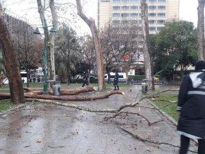 Gezi Parkı'nda, kuruyan ağaçlar kaldırılarak yenileri dikiliyor