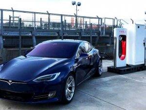 Tesla, fabrika inşası için planlanan alandaki ağaçları kesmeye başladı