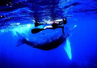 Okyanusta balinalarla yüzmeye ne dersiniz!