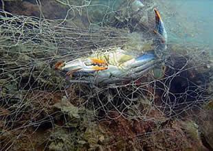 Yüzlerce deniz canlısının katili ağlar