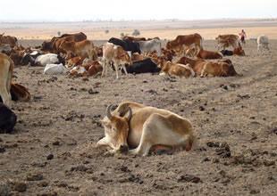 ABD'de kuraklık ciddi boyutlara ulaştı