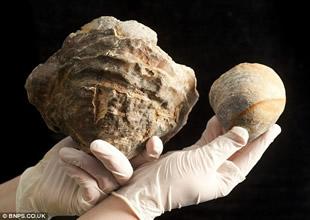 150 milyon yıllık istiridyede dev inci