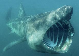 Fransız Adası'nda köpekbalığı saldırıları