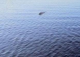 Loch Ness gölü canavarı görüntülendi
