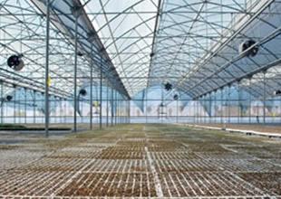Örtü altı tarımda yeni sezon hazırlıkları