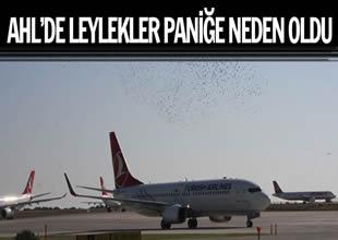 Atatürk Havalimanı'nı leylekler bastı