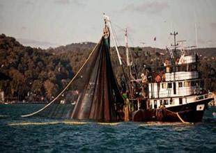 Karadeniz'de balık türü yüzde 50 azaldı