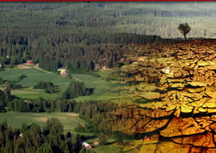 Yeni havalimanının %85'i ormanlık alan
