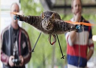 Bart Jansen, kedisinden helikopter yaptı