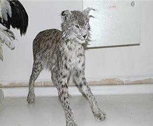 Nesli Tükenen Hayvanlar Ölümsüzleştiriliyor