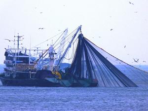 Balıkçılar, bu yıl sezondan umutlu