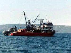 Yunanistan bizden aldığı balığı yine bize satıyor
