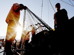 """Ege'de balık gelişimine """"av baskısı"""" tehdidi"""