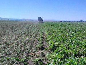 Etis Lojistik, 'tarım lojistiği'nde büyüyor