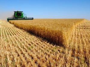 Tarım sektörüne kur darbesi