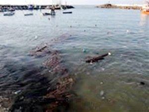 Denize atılan çöpler, balıkların üremesini engelliyor
