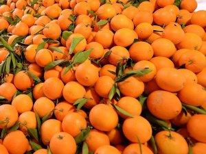 Rusya'ya portakal ve mandarin ihracatı arttı