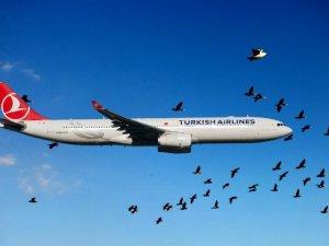 Kuşlar Sabiha Gökçen'de hava trafiğini durdurdu